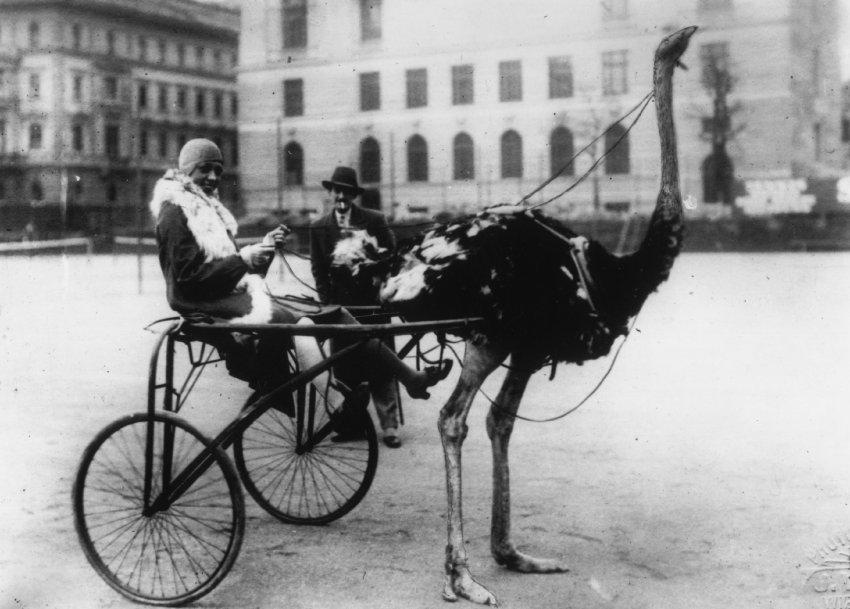 Josephine Baker und Harry Graf Kessler trafen in Berlin aufeinander: Hier Josephine Baker auf dem Pariser Platz um 1920 (Foto: General Photographic Agency/Getty Images)