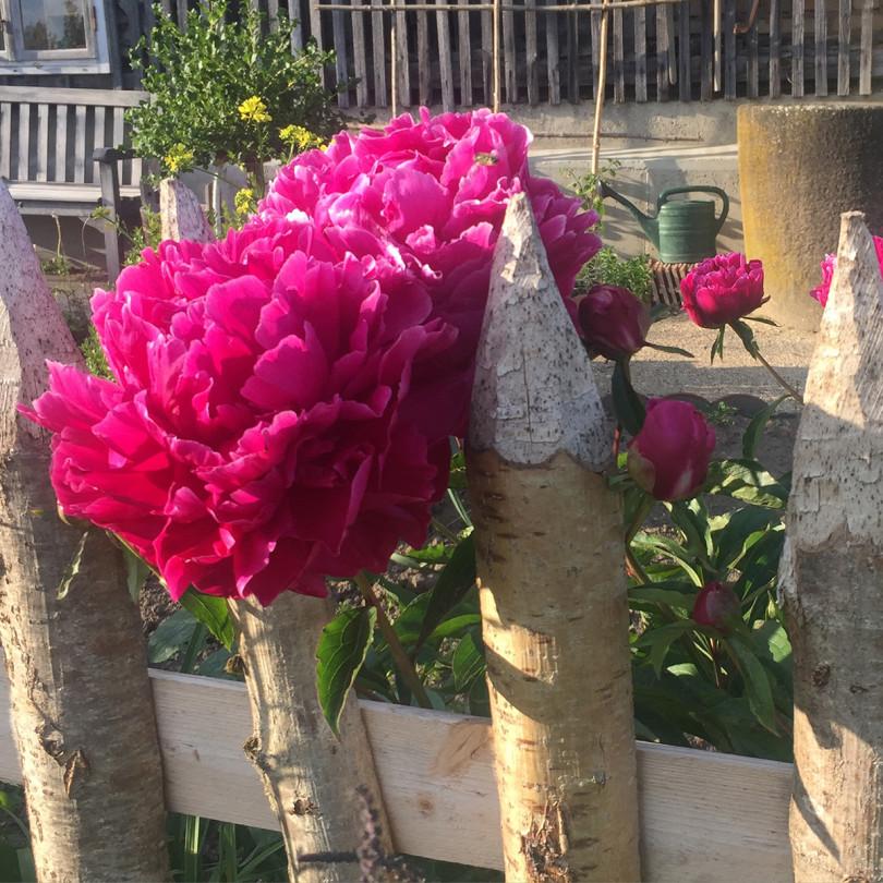 Blüten, die auch Cy Twombly gefielen, im Dauenberger Hof