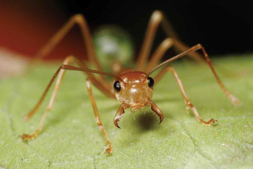 Fotografie, Nahaufnahme einer Ameise