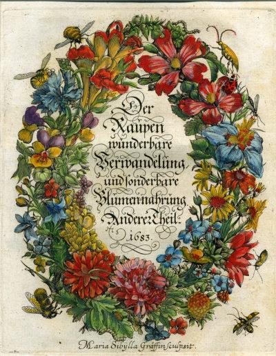 Das Kunstkabinett Strehler in Sindelfingen bietet viele Merian-Kupferstiche an, etwa den seltenen Titelkranz des Raupenbuchs (Abb.: Kunstkabinett Strehler, Sindelfingen)