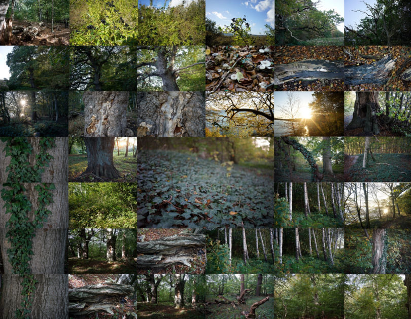 Forest Collage, Foto: Andreas Greiner
