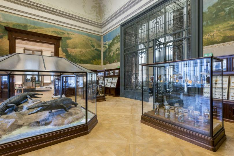 Krokodil-Saal im Royal Museum for Central Africa – Africa Museum, Foto: © Eva Besnyö / MAI; J. Van de Vijver ©RMCA, Tervuren