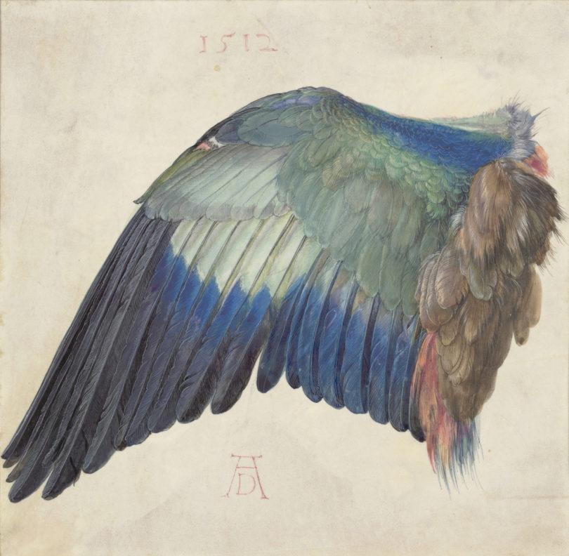 Der Flügel einer Blauracke, um 1500 (oder 1512), Aquarell und Deckfarben, mit Deckweiß gehöht, auf Pergament, Foto: Albertina, Wien