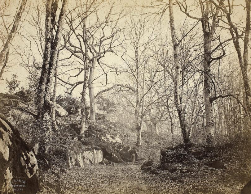 """Constant Alexandre Famin, """"Waldweg im Herbst"""", Barbizon, um 1865, Münchner Stadtmuseum, Sammlung Fotografie, Foto: Städtische Galerie im Lenbachhaus und Kunstbau München"""