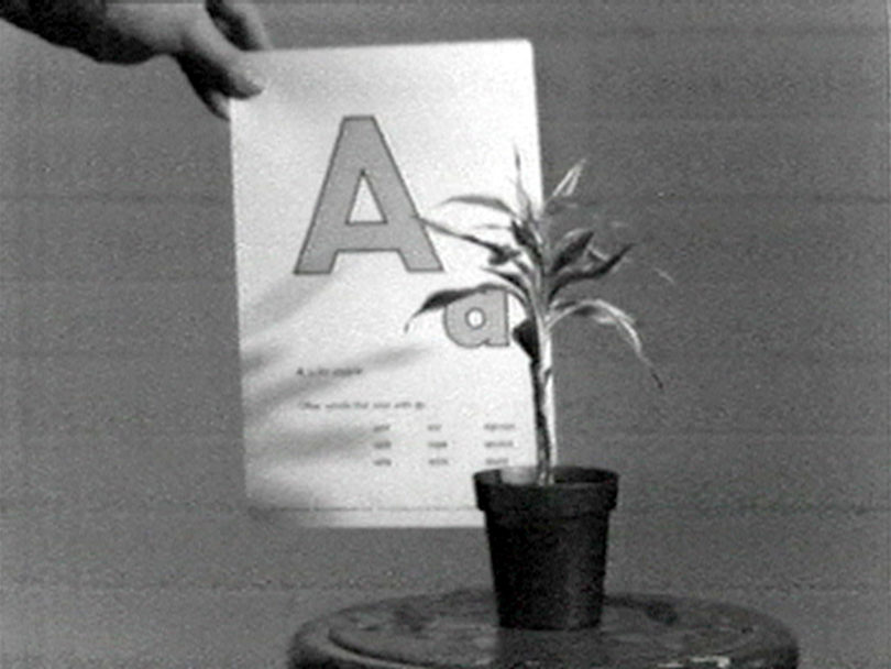 John Baldessari, Teaching a Plant the Alphabet, 1972, Video, 18:40 min, s/w, Ton, Foto: Courtesy John Baldessari